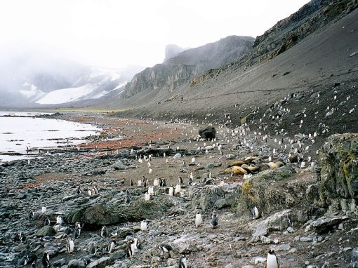 Hannah Point, Livingston Island, South Shetland Islands