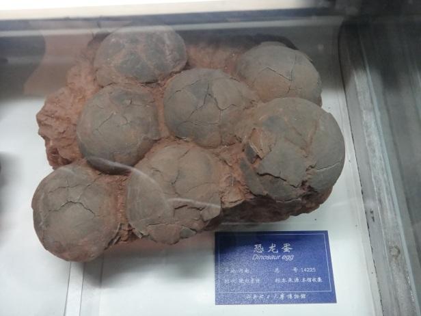 Dinosaur eggs.