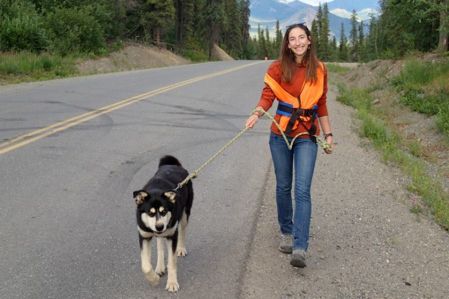 Figure 10: Author walking Lava, an official Denali sled dog.