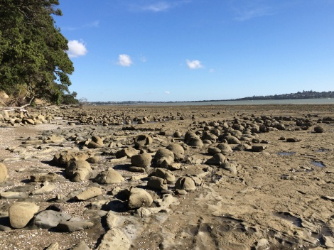 Miocene Waitemata Group carbonate concretions are exposed at Musik Point during low tide.