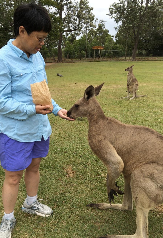 I fed kangaroos...