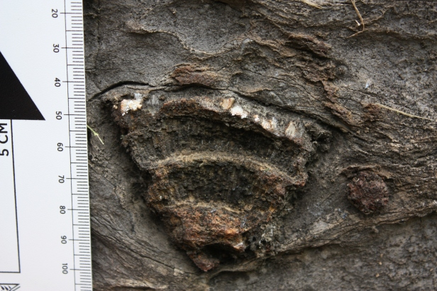 Coral fossil in the building stone of the Evitts Creek Aqueduct along the C&O Canal towpath