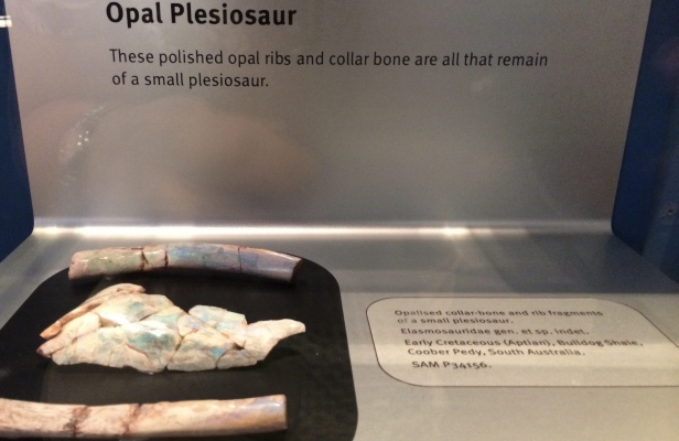 Opal replacement of fossils in Australia includes this plesiosaur.