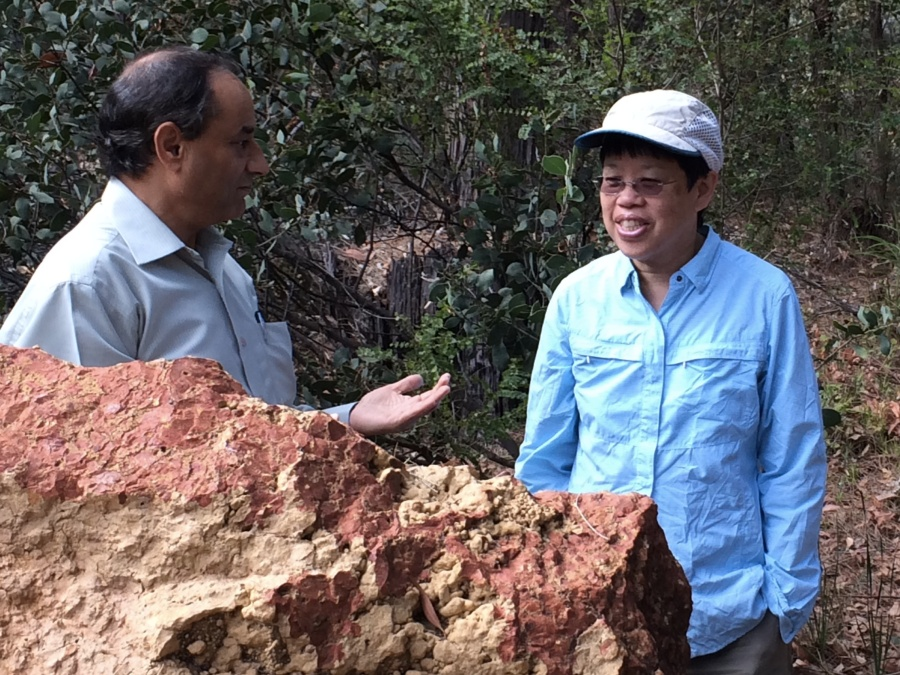 My host Dr. Ravi Anand at CSIRO explains the ferruginous pisoliths in complex soil horizons on top of Proterozoic granite.