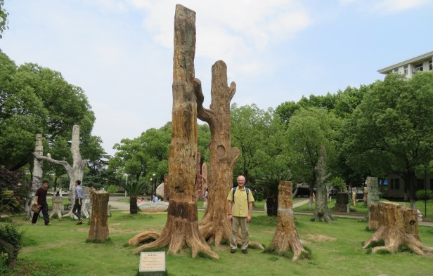 """In the center of China University of Geosciences is a lovely petrified forest park area with grouped fossil trees of different regions on realistic looking tree """"root"""" bases."""
