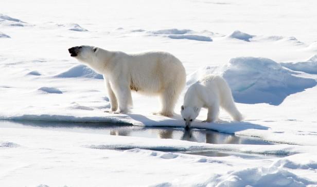 Polar_Bears_Christopher_Michel