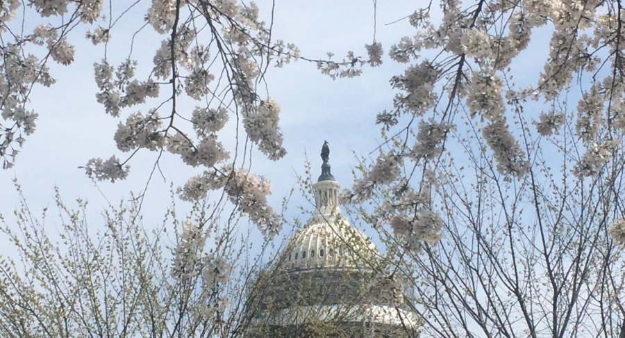 Capitol Hill in Spring. Credit: Elizabeth Goldbaum.
