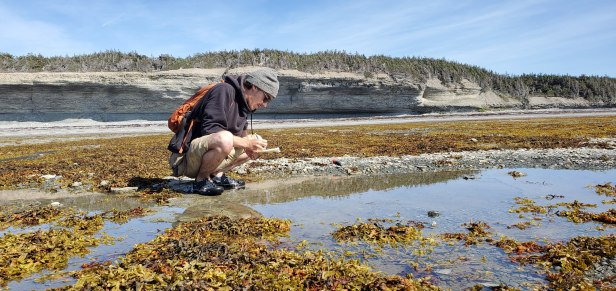3. Conducting bedding plane counts of fossils on the western coast of Anticosti Island (Québec, Canada). Rocky wave-cut tidal benches along the western coast of Anticosti provide unparalleled access to bedding planes and allow you to walk across the sea floor as it was 445 million years ago!